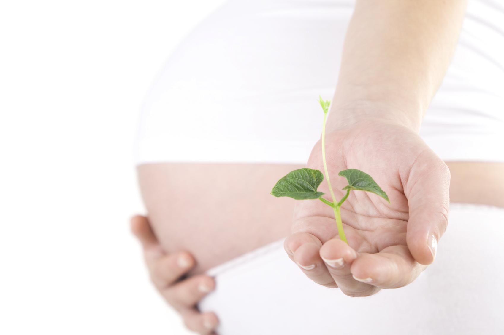 Embarazo bajo control: calendario de estudios