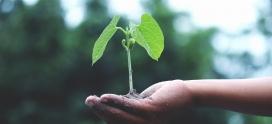 """""""La Fertilidad Asistida como motor de la conservación de especies y su impacto en el medio ambiente."""""""