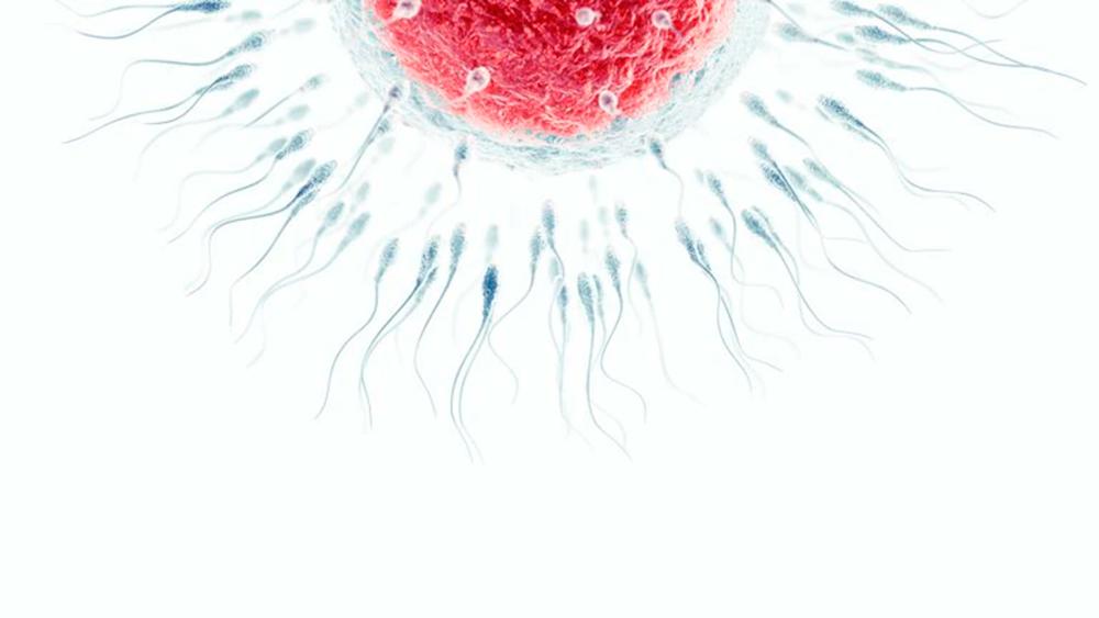 Qué son los disruptores endocrinos y de qué manera impactan en la fertilidad global